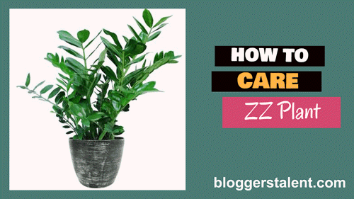 How to care ZZ plant