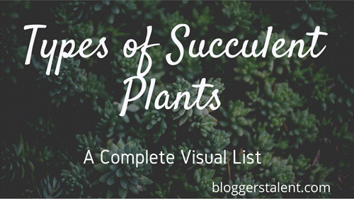 Types of succulent plant-Visual list
